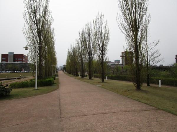 環水公園内の並木道