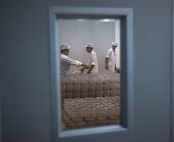 中国の蚊の工場